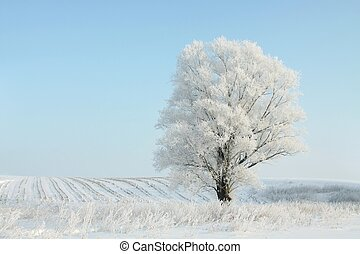 Winter tree against a blue sky
