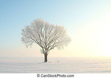 árvore, Inverno, amanhecer