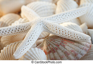 White finger starfish and seashells