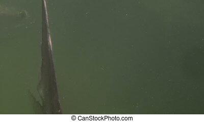 Tarpon Underwater Shot Seven