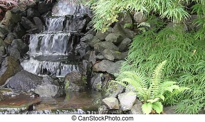 Waterfall in Backyard Zen Garden with Maple Trees and Ferns...
