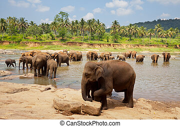 Elephant on Sri Lanka - Elephant on Sri Lanka