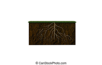 soil section with big roots inside isolated on white...