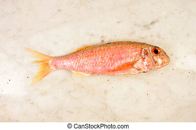 Red Mullet - Red mullet fish on a marble slab