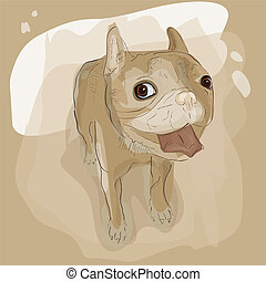 French bulldog - Vector illustration of french bulldog