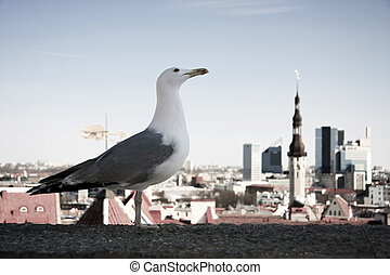 Sea gull in front of city panorama - A sea gull is enjoying...