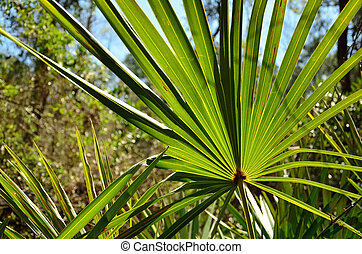 Palmetto in the forest - A palmetto provides a green splash...