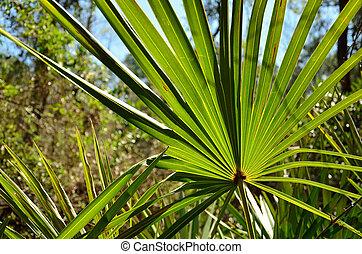 Palmetto in the forest - A palmetto provides a green splash...