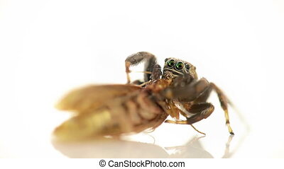 Spider,macro