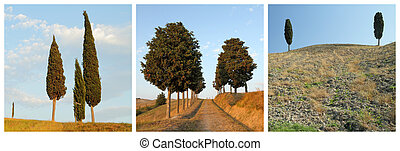 collage with cypresses - images from Tuscany, Italy, Europe