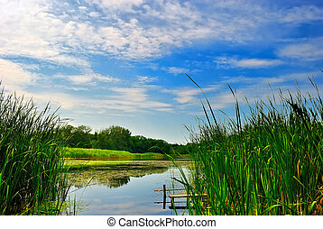 Lake with reeds under blue cloudy sky - Lake with green...