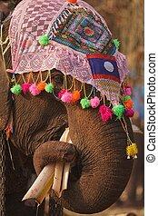 ornate elephant eating