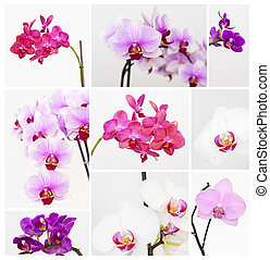 Orchid collection isolated on the white background