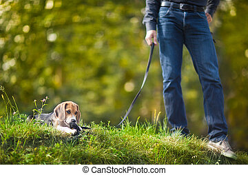 Little puppy on a leash. - Guy with a cute little puppy on a...