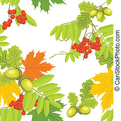 Acorns, rowan and maple leaves isolated on the white. Autumn...