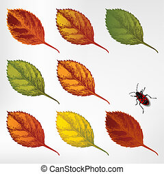 Set of colorful autumn leaves, hand
