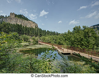 Black Hills in South Dakota in the Summer.