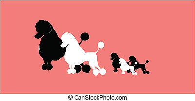 poodle family - family of poodles going out for walk with...