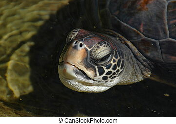 turtle face - extreme close up of a sea turtles face and...