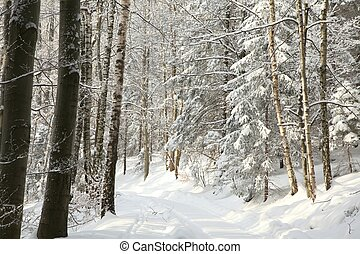 Path in winter forest on sunny day - Forest trail leading up...