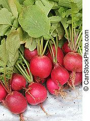 fresco, pink-red, coloreado, redondo, rábano, montón,...