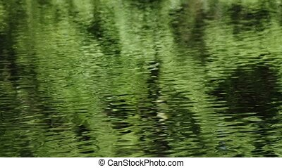 green waves - green moving waves of a lake
