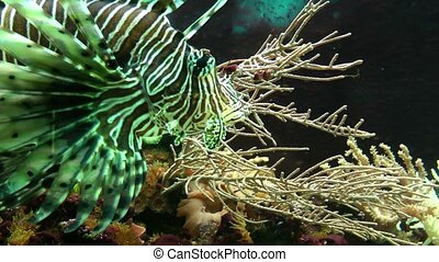 Beautiful tropical fish and underwater vegetation