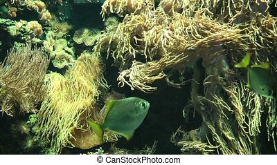 Close up of tropical fishes and underwater vegetation