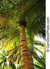 Palm tree canopies in tropical forest on a Caribbean island