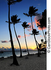 Tropical sunrise - Palm trees silhouettes at sunrise at...