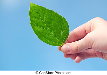 Hand holding green leaf - Hand holding fresh green leaf on...