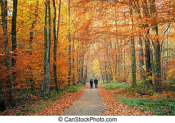 路, 秋天, 森林