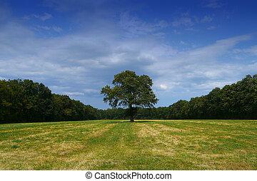 單獨, 領域, 樹