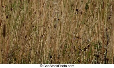 Prairie - the prairie wild plants background