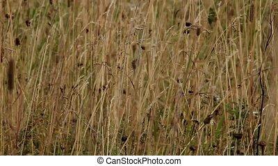 Prairie - the prairie wild plants background