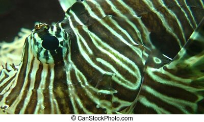 Eye close up of tropical fish - Eye close up of beautiful...