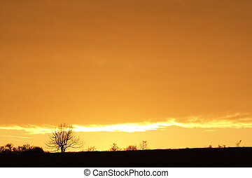 autumn sunset with soliraty tree - Image of the autumn...