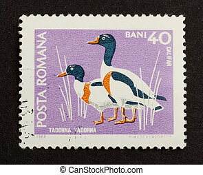 ROMANIA - CIRCA 1980: Stamp printed in Romania shows a pair...