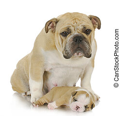 mother dog and puppy - mother dog and three week old puppy -...