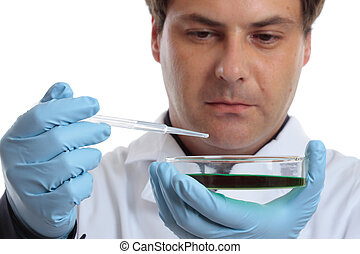 Scientist or chemist with petri dish - A medical or...