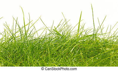 Close up of fresh thick grass with water drops in the early...