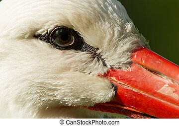 Extreme close-up of a stork