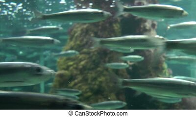 Fast bank of fish close up