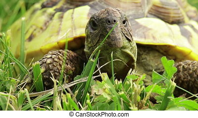 Turtle on grass