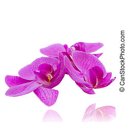 flowers of orchid