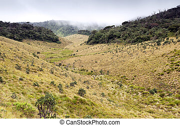 Mist Forest, savanna, and clouds at Horton Plains - Mist...