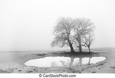 The lake in the fog - A little lake during a hard winter...