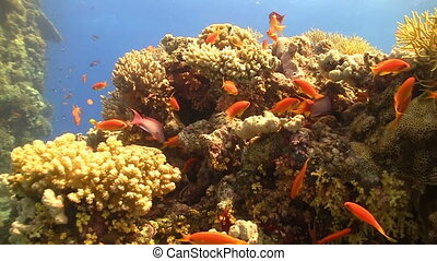 Colorful Fish on Vibrant Coral Reef