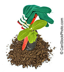 Transplant of a tree and garden tools on a white background. Concept for environment conservation