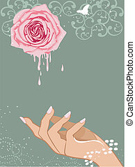 Aromatherapy - Pink rose and female hand vector illustration